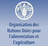 Reuters - Ebola threatens food security in West Africa: FAO