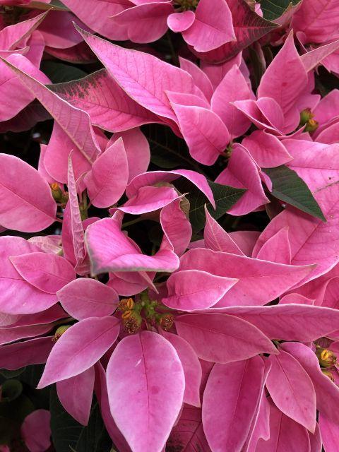 Fleurs hivernales