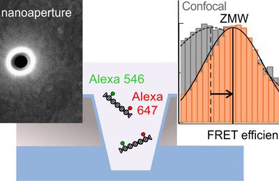 Long-Range Single-Molecule Förster Resonance Energy Transfer between Alexa Dyes in Zero-Mode Waveguides