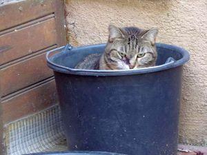 C'est certain : Midinette aime les pots du jardin