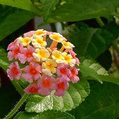 J'ai descendu dans mon jardin... (3) - Fleurs du jour (20-16) - Noy et Gilbert en Thaïlande