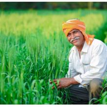 La FFAR et le CIMMYT s'associent pour protéger le blé des ravages du changement climatique
