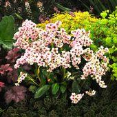 Plantes d\'ombre : 5 nouvelles vivaces, faciles à cultiver