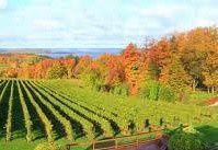Le Michigan et la Vigne