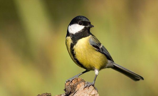 oiseaux des jardins le matin et échassiers l'après-midi