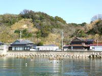 Préf. de Hyôgo : île d'Awaji : Hanasajiki et ses champs de fleurs