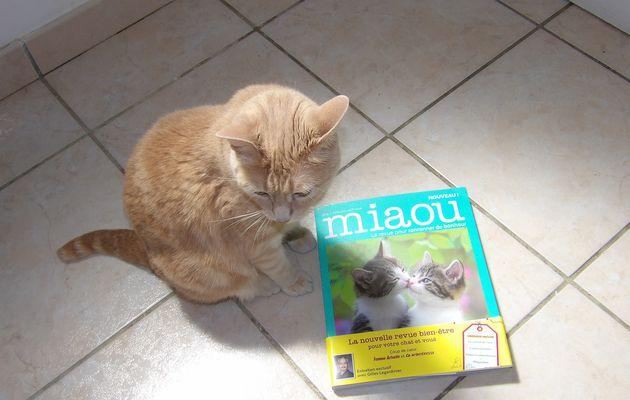 Je découvre miaou la revue