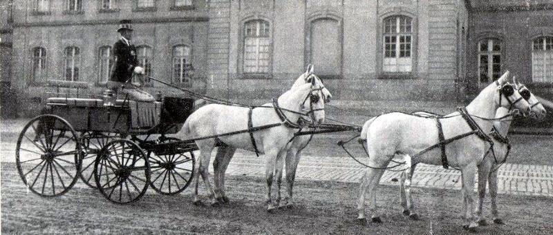 Attelage de chevaux blancs hongrois