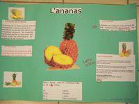 5°F expo fruits