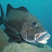 VIDEO. Êtes-vous aussi intelligent que les poissons ?