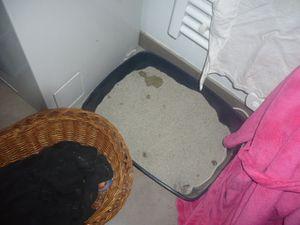 Pour désodoriser la litière du chat :