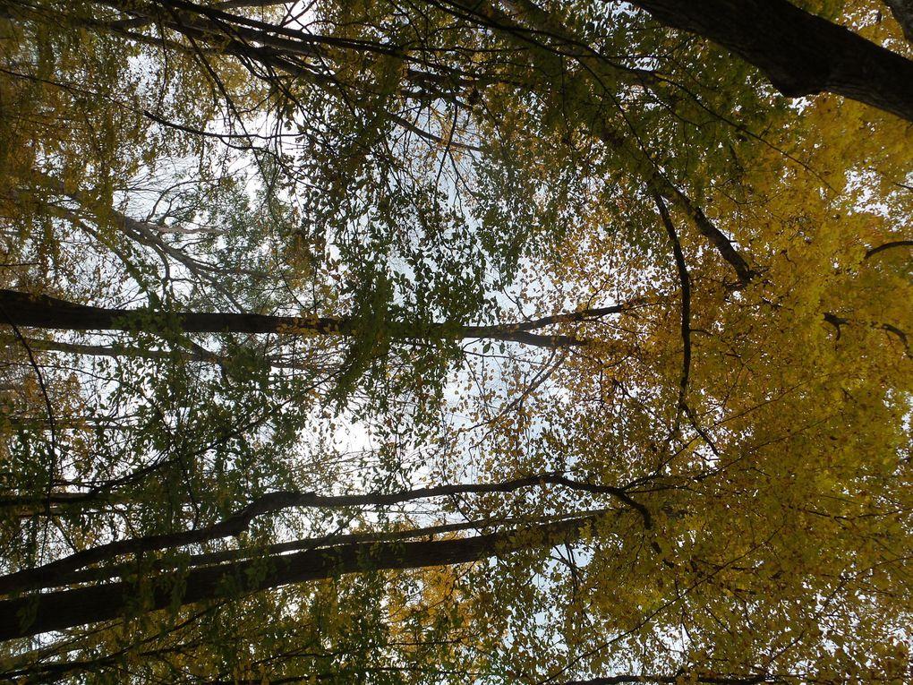 Quatre jours dans le bois et voilà notre défi Frontenac est complété!
