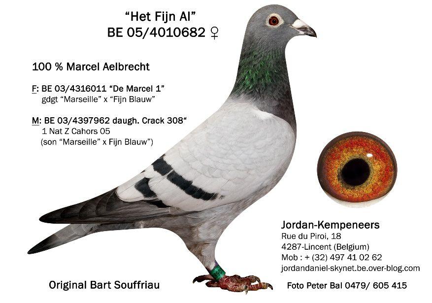 Album - Aelbrecht / De Rauw Sablon Collector