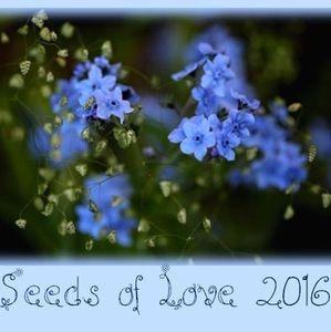 Merci aux Seedlovers - Elodie du Lot