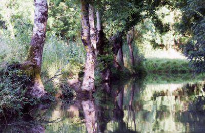 Comme un tableau... Jeu d'ombres dans le Marais poitevin