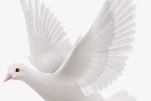 Message Céleste Via Valentina Papagna (Sydney, Australie) :   Dieu le Père ... assis ... tenait une belle Colombe dans ses mains saintes - 10  Octobre 2020