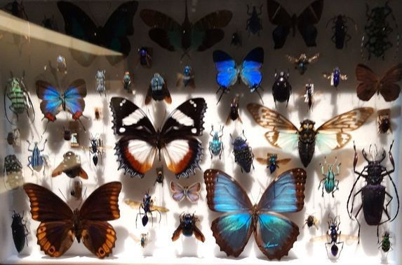 Collection d'Entomologie Paris, Muséum national d'Histoire naturelle