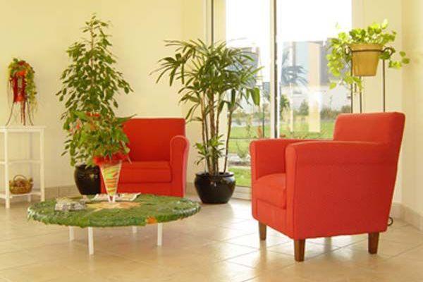 Dépolluer l'intérieur par les plantes
