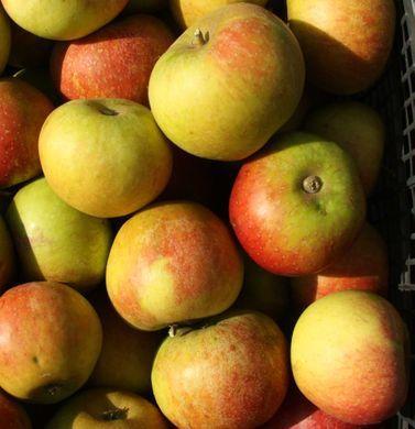 Résistez à la tyrannie des vendeurs d'appareils électroménagers...en vendant des pommes.