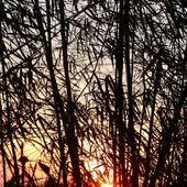 Le feu dans les bambous - La couleur du ciel (19-04) - Noy et Gilbert en Thaïlande