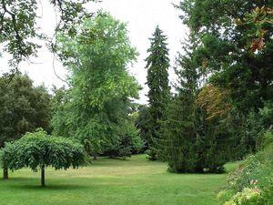 Taiji Quan au Jardin des Plantes de Toulouse... la suite