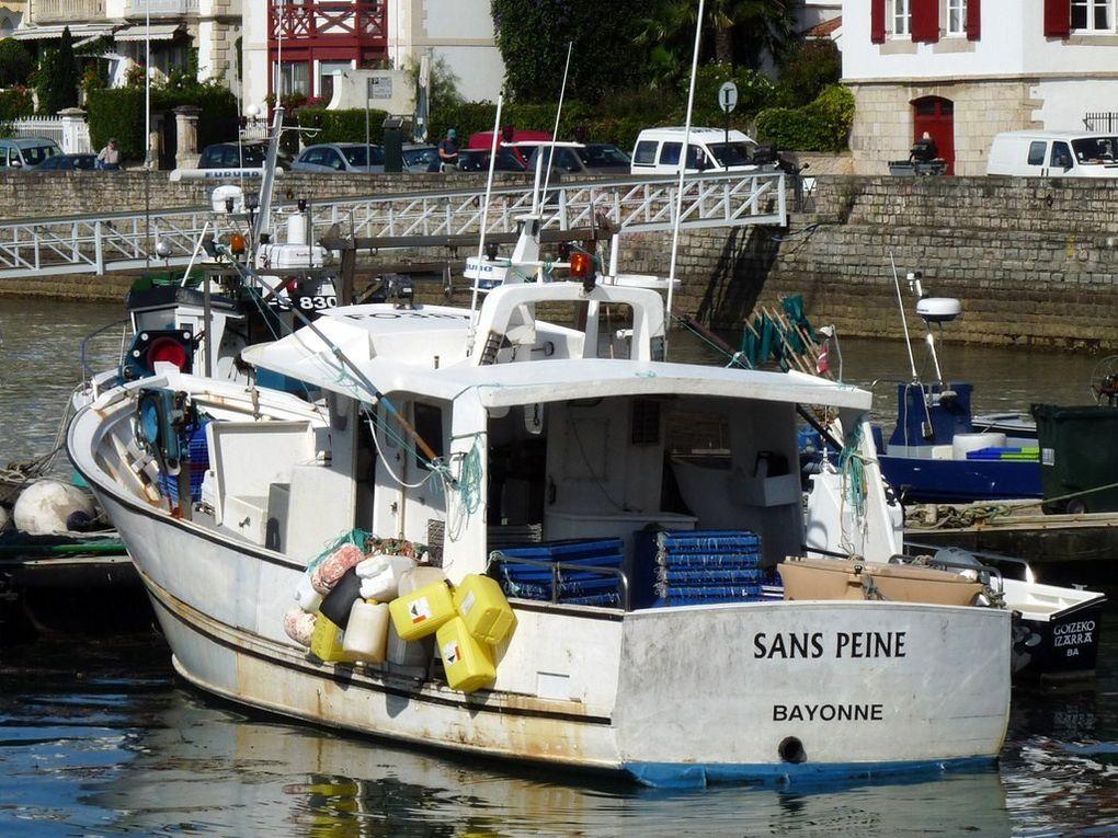 SANS PEINE  BA294534 ,dans le port de Saint Jean de Luz