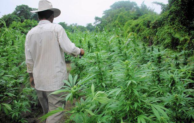 COVID-19 impact on Cannabis Market