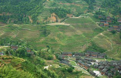 Guangxi (12) ... Dazhai et les Terrasses du peuple Yao