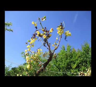 Une belle fête de l'arbre à Maurs