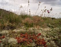 La nature ras le sol