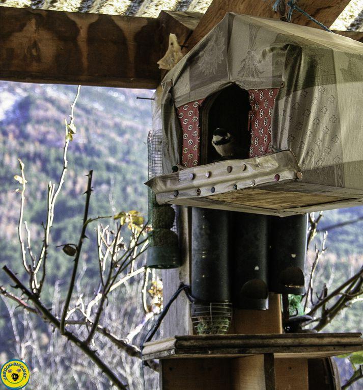 La Mure Argens  : L'hiver est arrivé , les oiseaux sont revenus se nourrir dans les cabanes