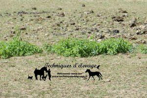 Le vermifuge de printemps : l'aspect environnemental