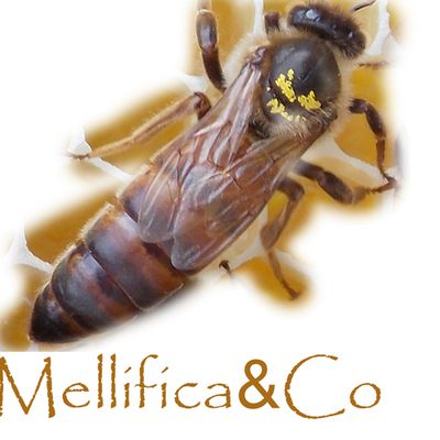Association Mellifica&Co
