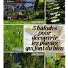5 balades pour découvrir les plantes qui font du bien
