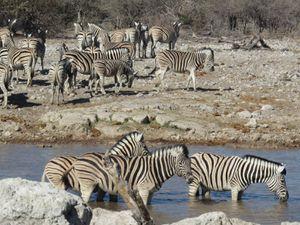 Parc animalier Etosha (est)