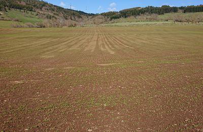 AOP Lentille du Puy: une région de production à contre-courant de l'agroécologie?