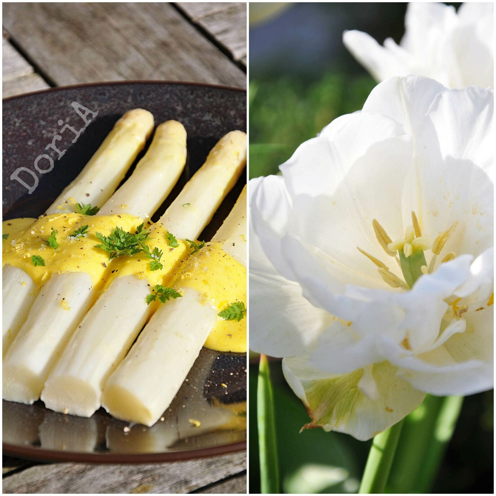 Asperges blanches, sauce hollandaise