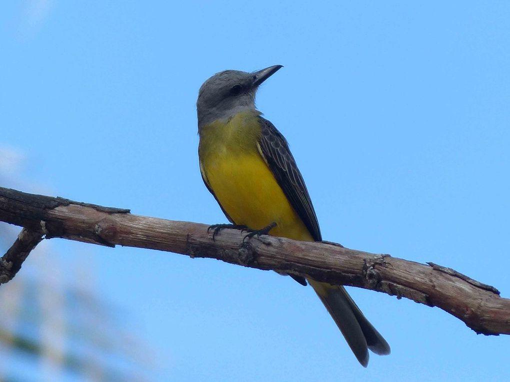 Colombie du nord