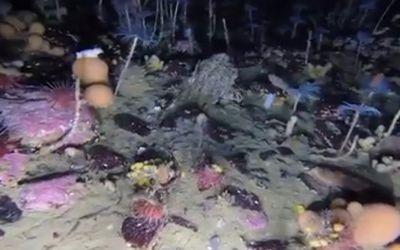 Sciences : qu'est-ce qui se cache sous la banquise de l'Antarctique ?
