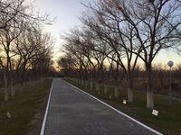 Cérémonie de plantation d'arbres !
