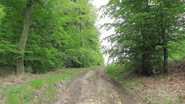 carrefour_Route de Royaumont_Sentier (parcelle 145)