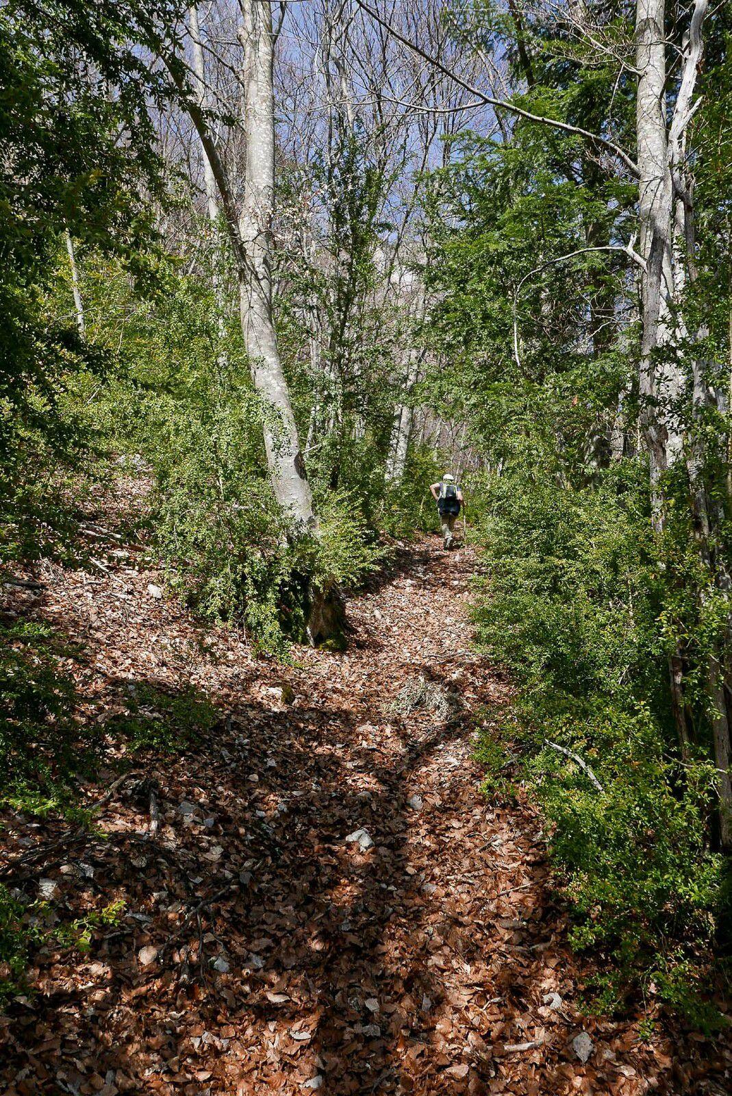 Départ du village d'Archiane, jusqu'à rejoindre la piste qu'il faut suivre vers le nord sur quelques centaines de mètres. Gagner un sentier assez marqué qui monte raide rapidement .