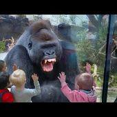 Quand les animaux du Zoo attaquent les humains