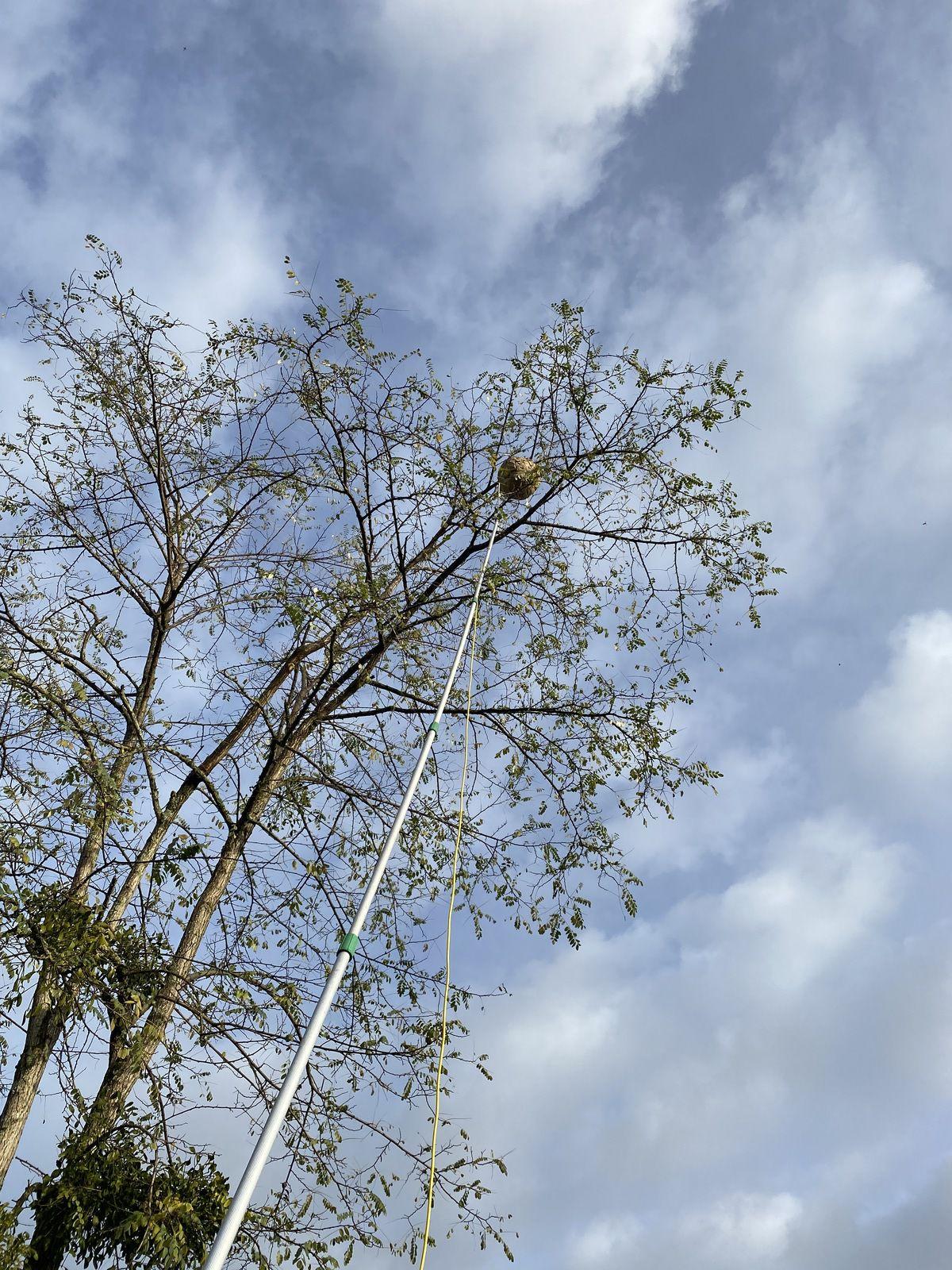 PORTETS traitement destruction rapide de vos nids de frelons contact ADSA33 0678183234