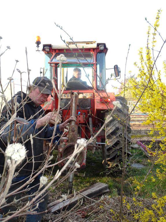 Un deuxième nid pour les cigognes au jardin de l'Ermite