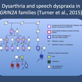 Speech dyspraxia and dysarthria - the other side of GRIN2A