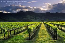 Mendocino Wine Region of California