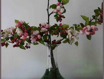 Carafe en fleurs...