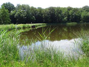 2 étangs autour de Lure (partie 2)
