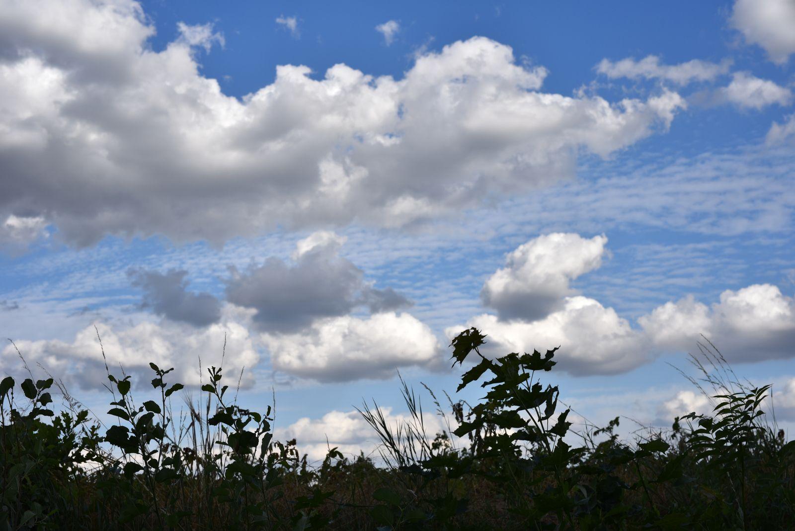 Tu aimais ces nuages
